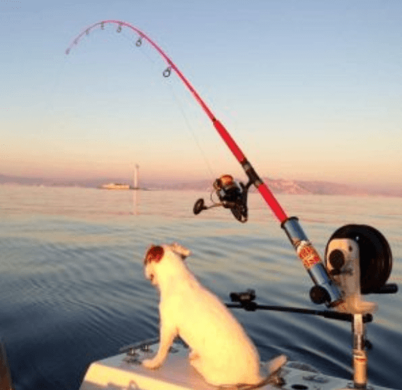 how to choose a telescopic fishing
