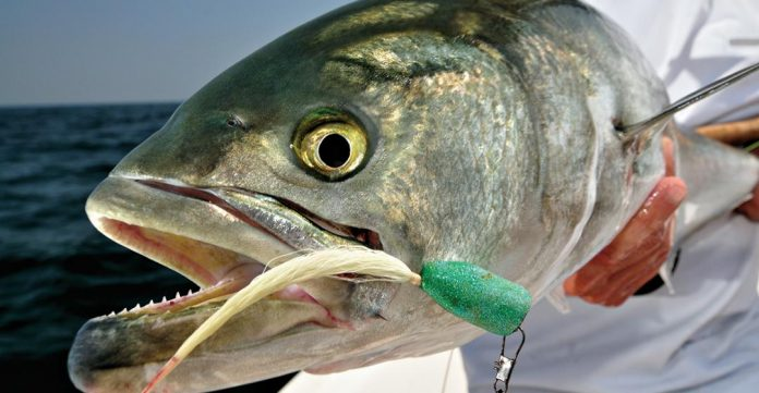 Best Bluefish Lures