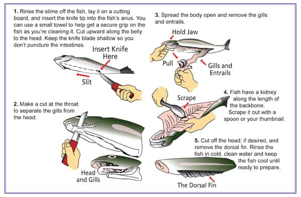 cleaning a fish guide